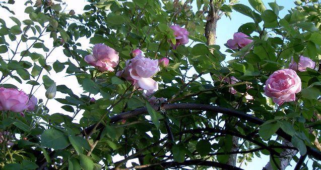 06-10-2008konsutanti2.JPG