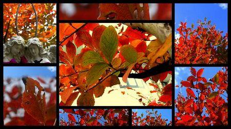 ナツツバキの紅葉.jpg