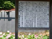 五郎沼1.jpg