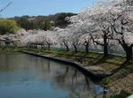 高松の池.jpg